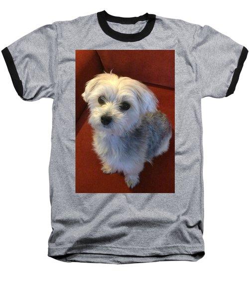 Yorkshire Terrier Baseball T-Shirt by Robin Regan