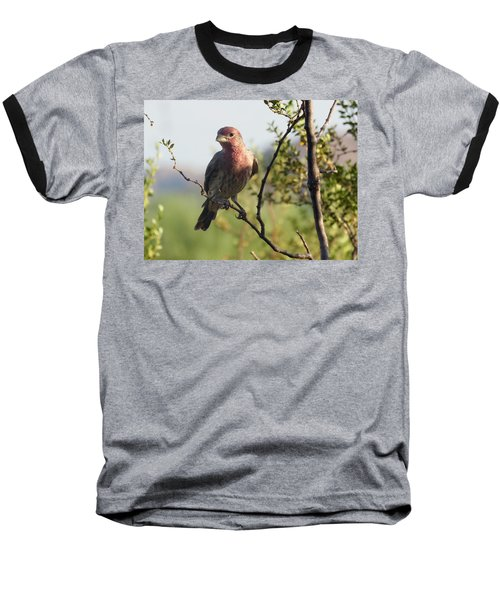 Young Male House Finch Baseball T-Shirt