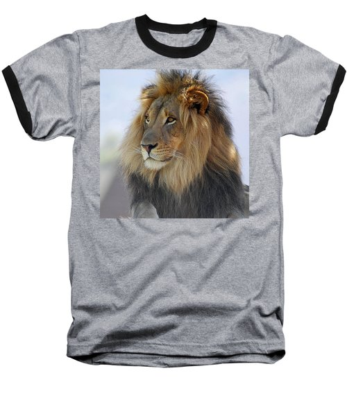Young Male Lion Baseball T-Shirt