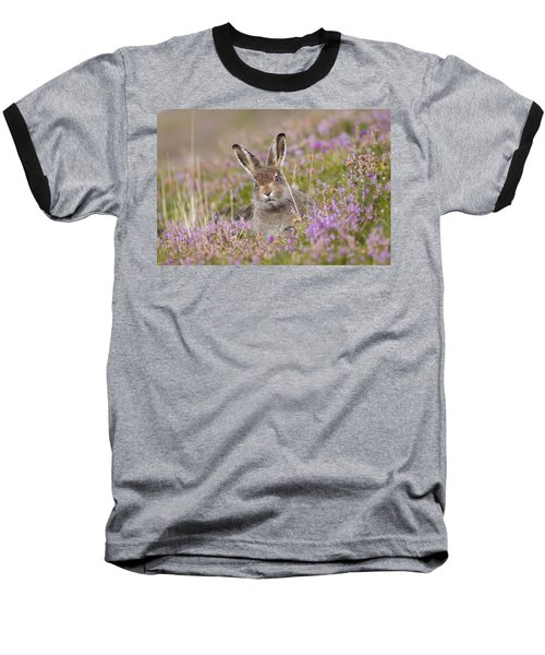 Young Mountain Hare In Purple Heather Baseball T-Shirt
