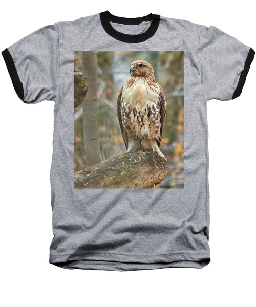 Young Red Tailed Hawk  Baseball T-Shirt