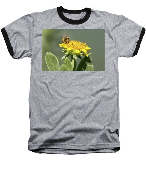 Yumm Pollen Baseball T-Shirt by Christopher L Thomley