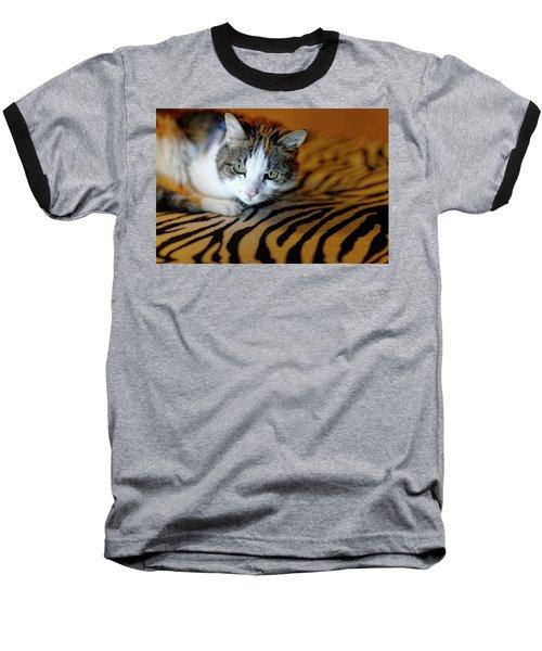 Zebra Cat Baseball T-Shirt
