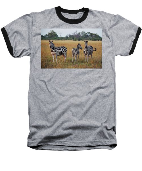 Zebra Family Baseball T-Shirt by Bruce W Krucke