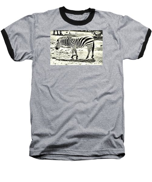 Zebra In Black And White Baseball T-Shirt by James Potts