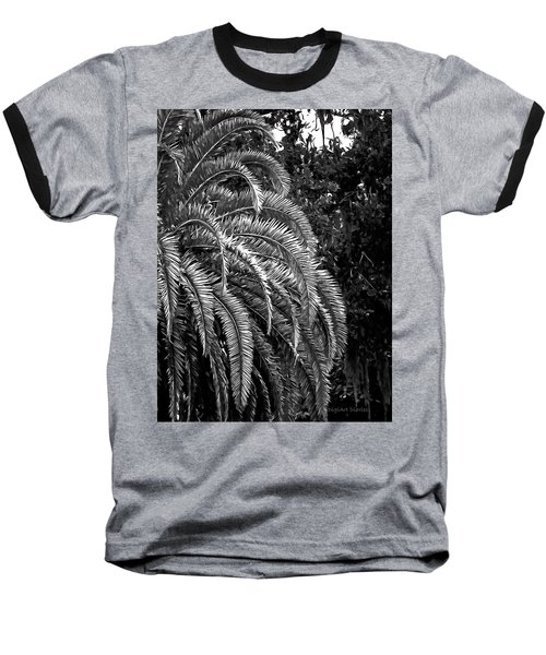 Baseball T-Shirt featuring the photograph Zebra Palm by DigiArt Diaries by Vicky B Fuller