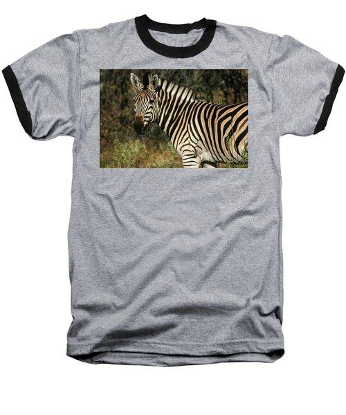 Zebra Watching Baseball T-Shirt