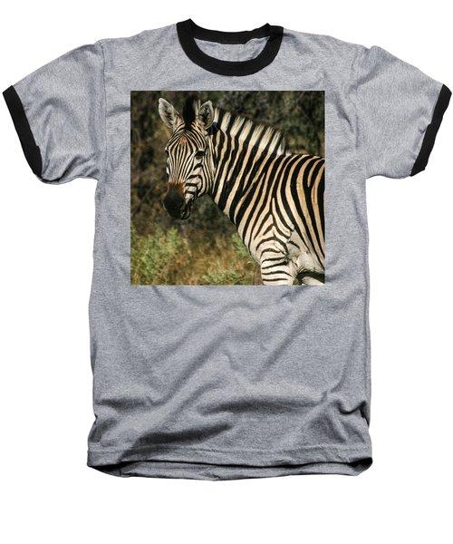 Zebra Watching Sq Baseball T-Shirt