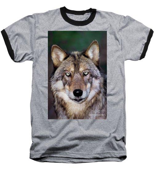 Gray Wolf Portrait Endangered Species Wildlife Rescue Baseball T-Shirt