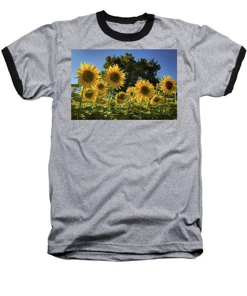 Sunlit Sunflowers Baseball T-Shirt