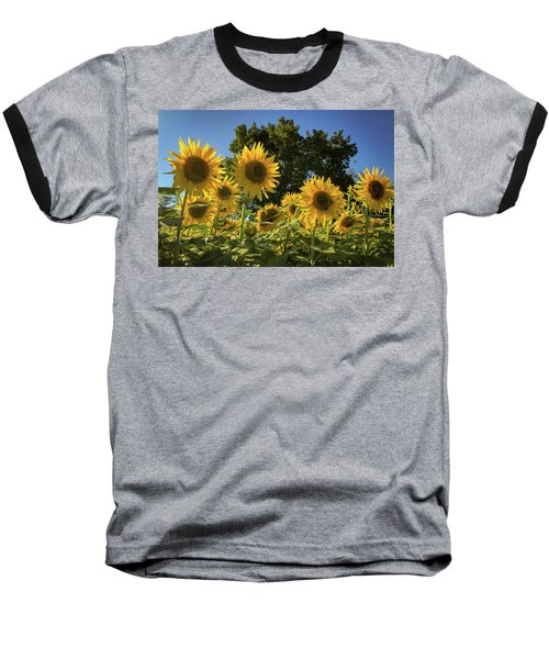 Sunlit Sunflowers Baseball T-Shirt