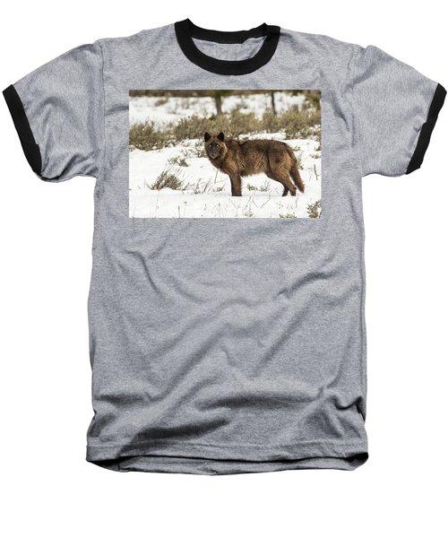 W7 Baseball T-Shirt