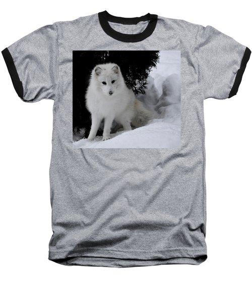 Artic Fox Baseball T-Shirt