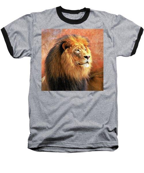 Alpha Male Lion Baseball T-Shirt