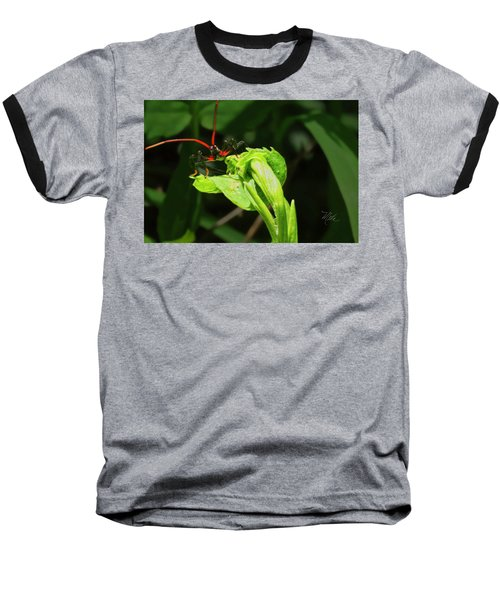 Assassin Bug Baseball T-Shirt
