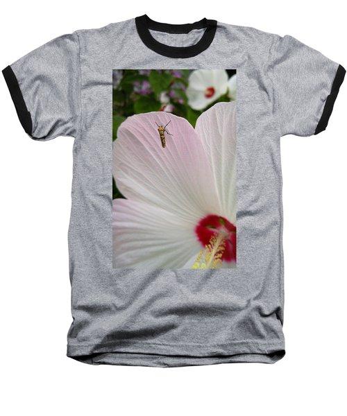Atteva Aurea 1 Baseball T-Shirt
