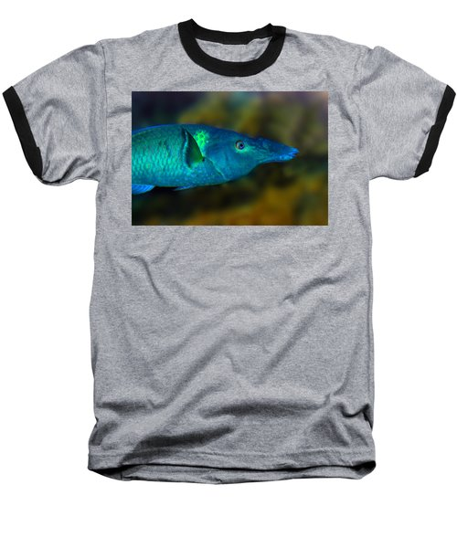 Bird Wrasse Baseball T-Shirt