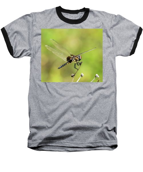 Black Saddlebags Dragonfly Baseball T-Shirt