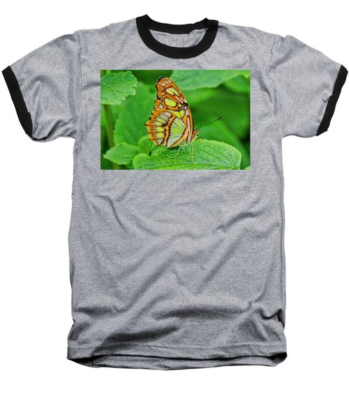 Butterfly Leaf Baseball T-Shirt