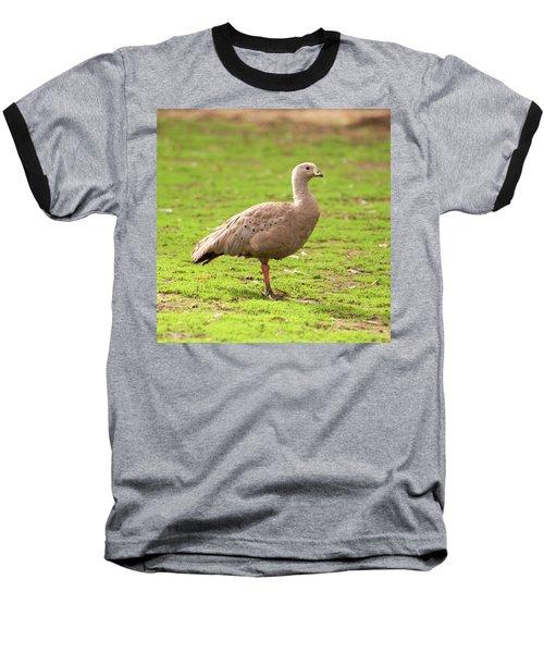 Cape Barron Goose Baseball T-Shirt