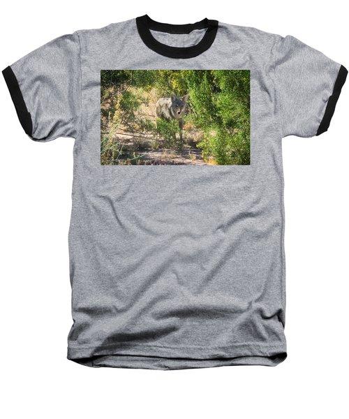 Cautious Coyote Baseball T-Shirt