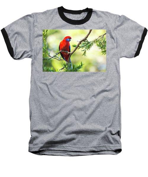 Crimson Rosella Baseball T-Shirt