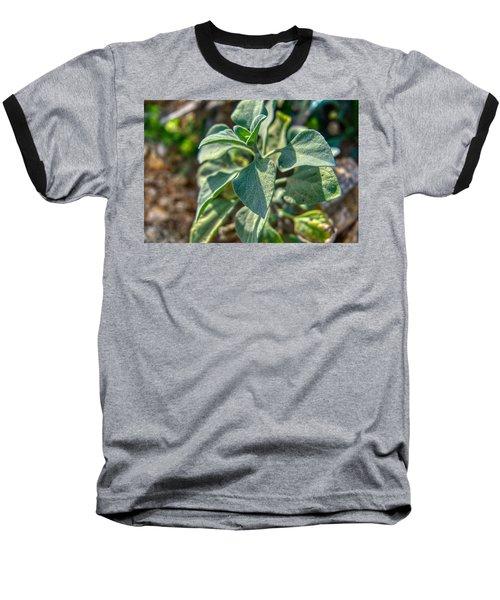 Desert Plant Life Baseball T-Shirt