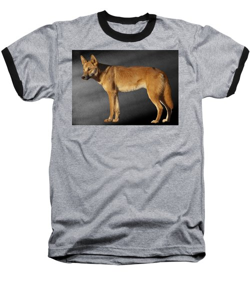 Dingo Baseball T-Shirt