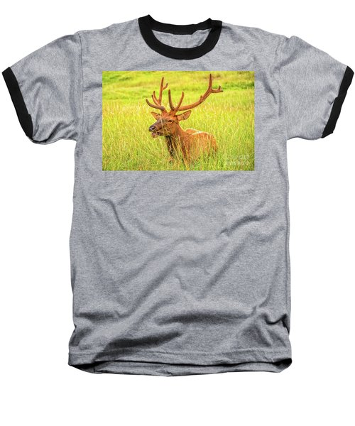 Elk Baseball T-Shirt