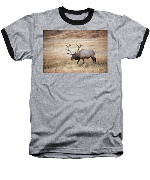 Elk In Yellowstone National Park Baseball T-Shirt