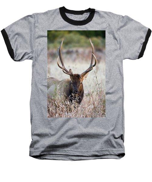 Elk Portrait Baseball T-Shirt