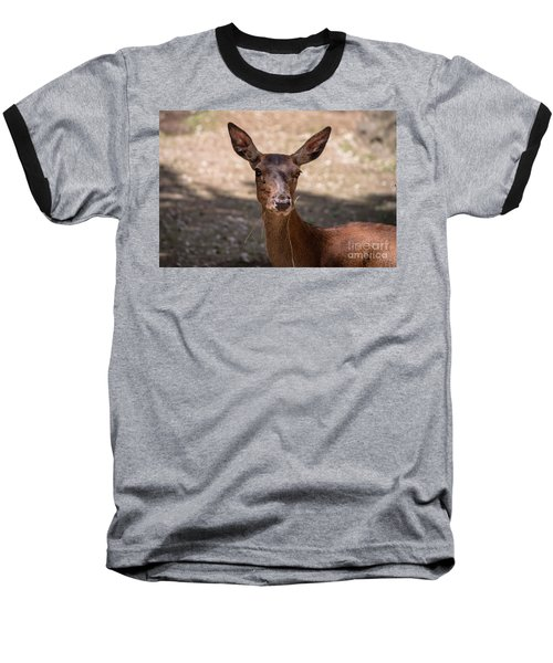European Roe Deer Baseball T-Shirt