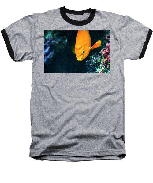 Garibaldi Baseball T-Shirt