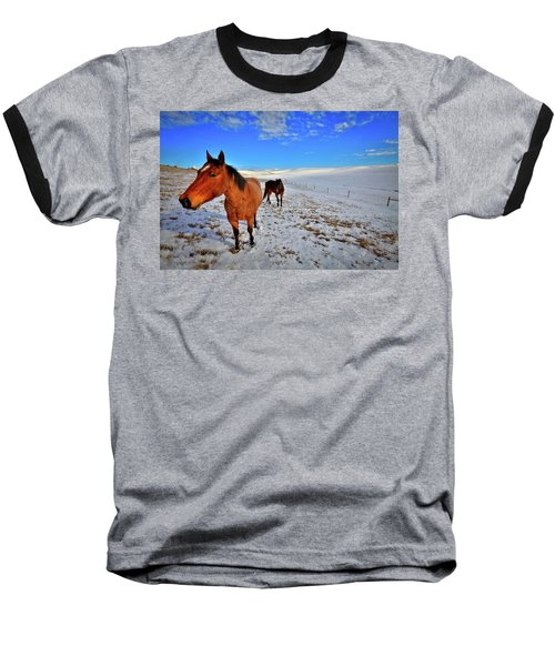 Baseball T-Shirt featuring the photograph Geldings In The Snow by David Patterson
