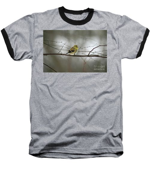 Goldfinch In Winter Looking At You Baseball T-Shirt