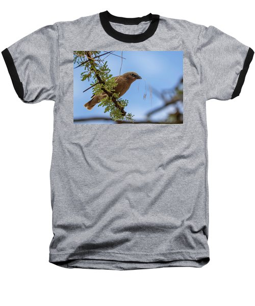 Gray-headed Social Weaver Baseball T-Shirt