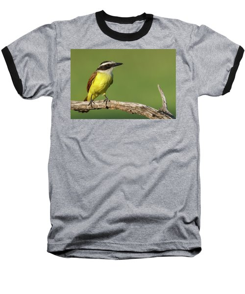 Great Kiskadee Baseball T-Shirt