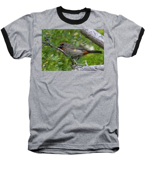 Greater Antillean Bullfinch Baseball T-Shirt