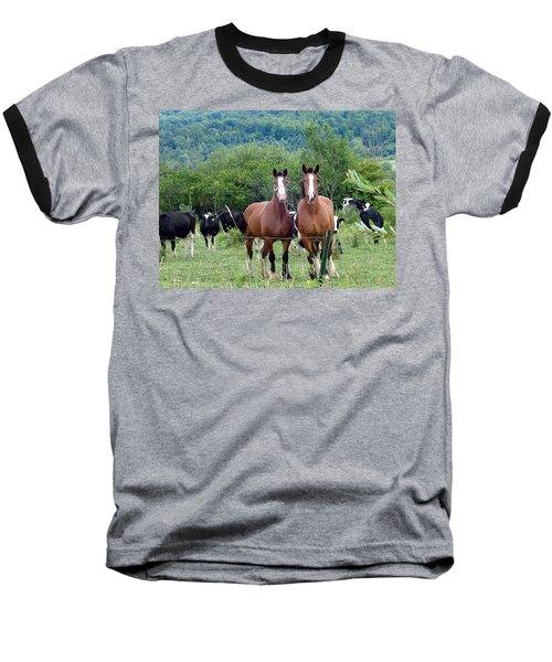 Horses And Cows.  Baseball T-Shirt