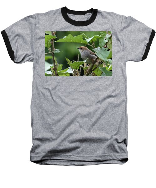 Hunter's Cisticola Baseball T-Shirt