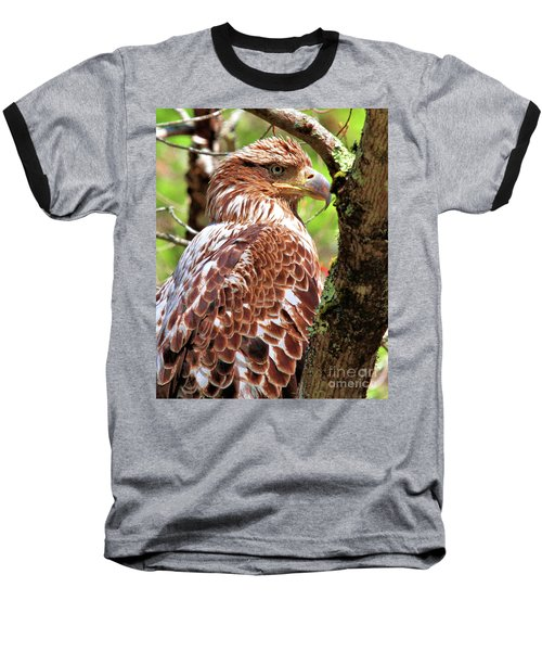Immature Eagle Baseball T-Shirt