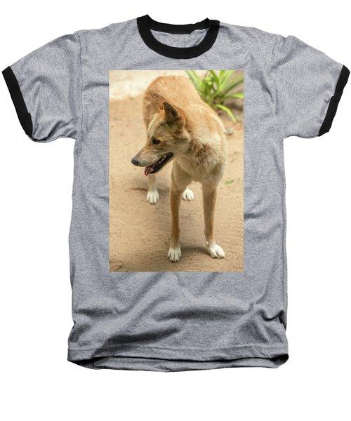 Large Australian Dingo Outside Baseball T-Shirt