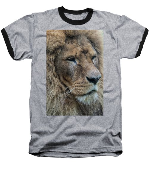 Baseball T-Shirt featuring the photograph Lion by Anjo Ten Kate