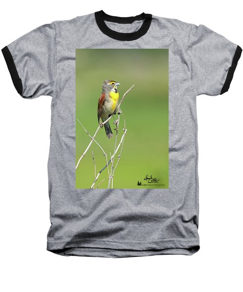Male Dickcissel Baseball T-Shirt