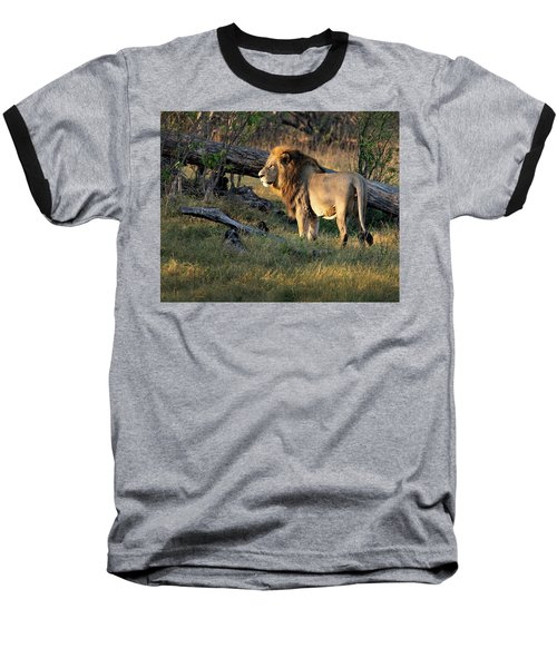 Male Lion In Botswana Baseball T-Shirt