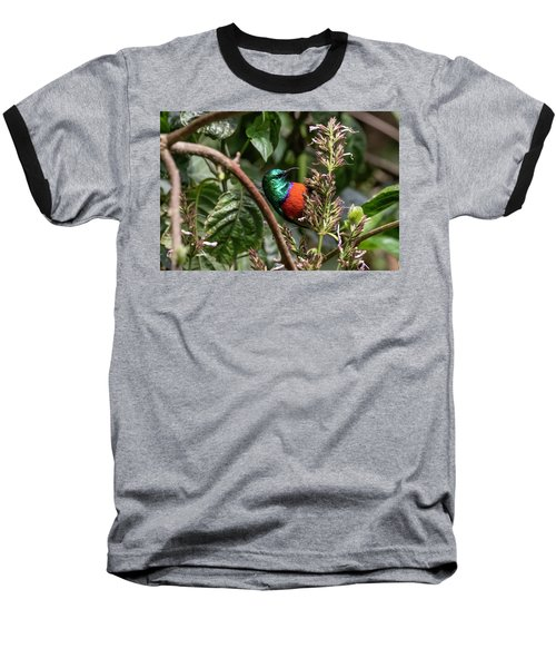 Northern Double-collared Sunbird Baseball T-Shirt