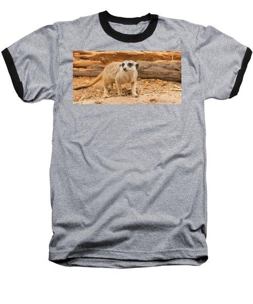 One Meerkat Looking Around. Baseball T-Shirt