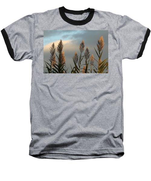 Ornamental Pampas Grass Baseball T-Shirt