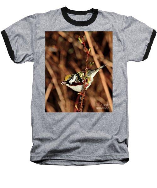 Perky Little Warbler Baseball T-Shirt