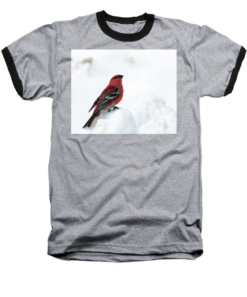 Pine Grosbeak In The Snow Baseball T-Shirt